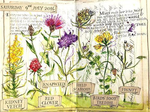 Wild Flower Sketchbook Explosion