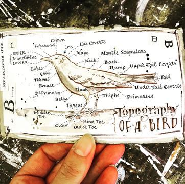 Vintage style field journal bird diagram