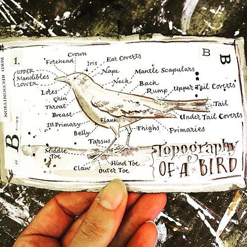 Illustrated Bird Diagrams