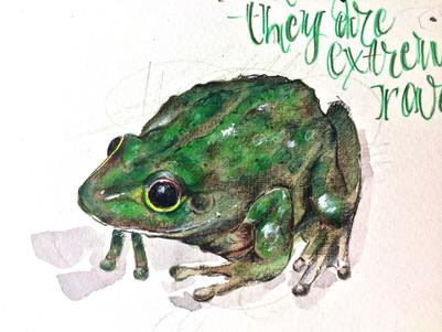 Frog Detail