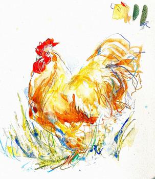 Chicken Sketch
