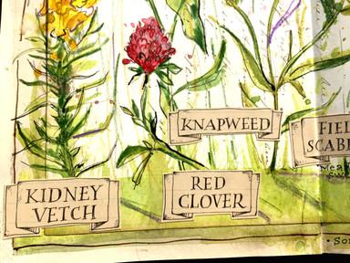 Mixed Media Wildflower Study