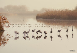 Cranes in line