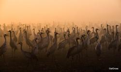 Crane in the morning fog