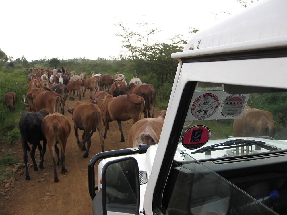 Traffic jam on the way from Molo to Karungu, Kenya.