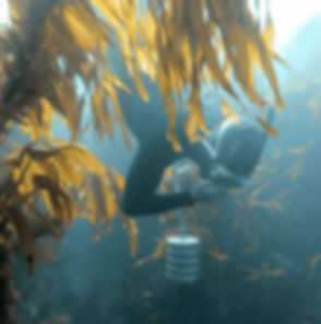 diver%20kelp2-min_edited.jpg