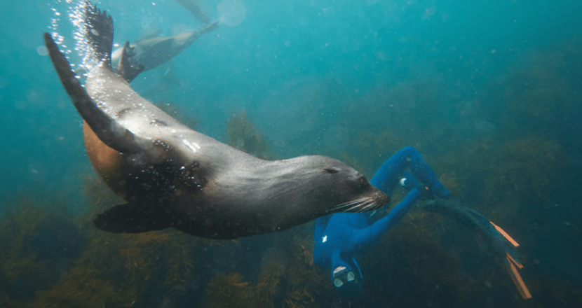 Seal and diver-min.png