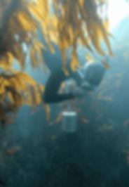 diver%252520kelp2-min_edited_edited_edited.jpg