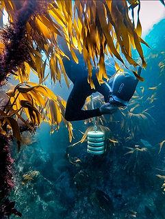 Diver Kelp lightroom edit.jpg