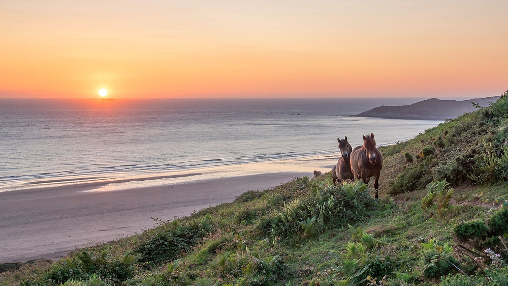 Wild Horses at Woolacombe Beach