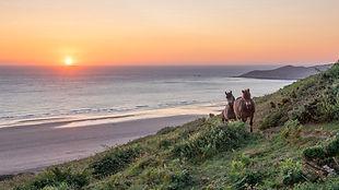 Sunset with Exmoor Ponies - Mid.jpg