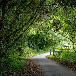 Canva Tarka Trail.jpg