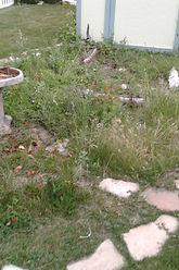 Garden area needing landscape care