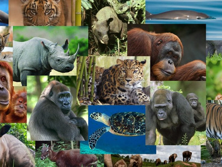 Take Small Actions to Help Endangered Species