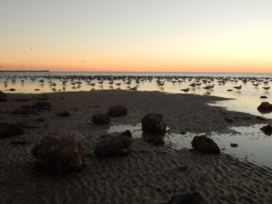Beach rocks Barnacles and Birds