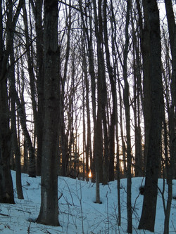 Winter sun sets in the Maine woods