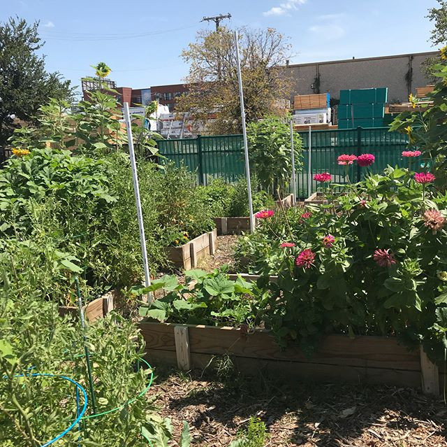 Backyard Garden at The Bridge Homeless Recovery Center