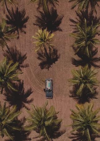 Drohnenaufnahme über den Palmen in Australien