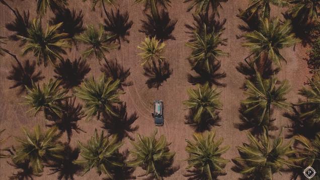 Palm Tree PADRONE_Moment.jpg