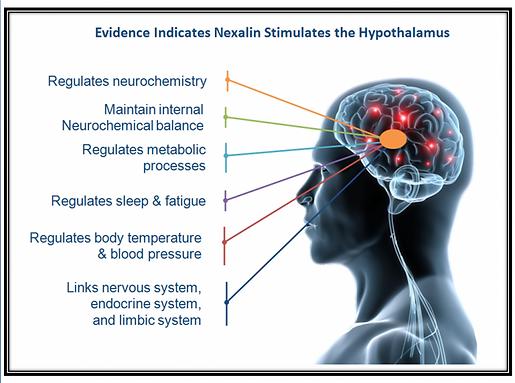 Hypothalmus.png
