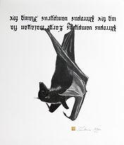 13.Large malayan flying fox. 32-38cm.jpg