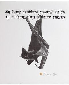 Zuzanna Lenartowicz - Malcher