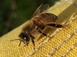 bee love: ain't she sweet