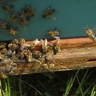 bees on the landing.jpg