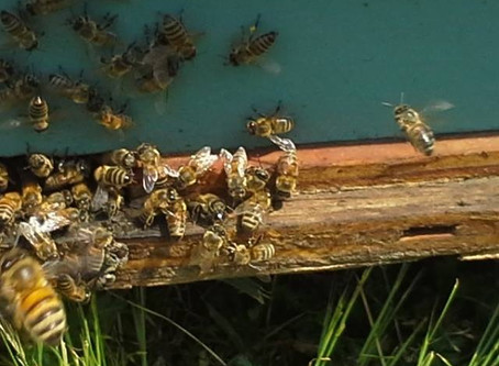 Bees Don't Make Cannabis Honey