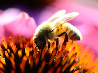 Summer Online Bee Workshops and Intensives
