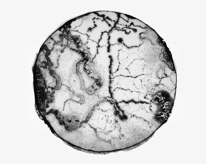 Contaminated agar, 2020, petri dish