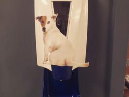 Day +8: Doggie doo