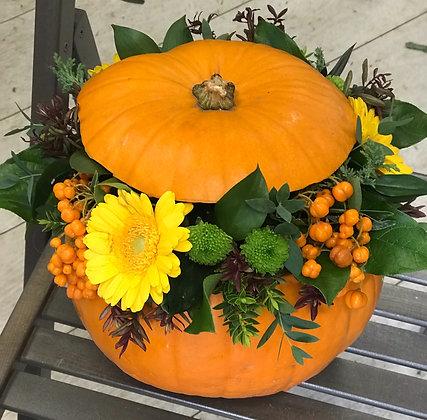 Gerbera Pumpkin Arrangement
