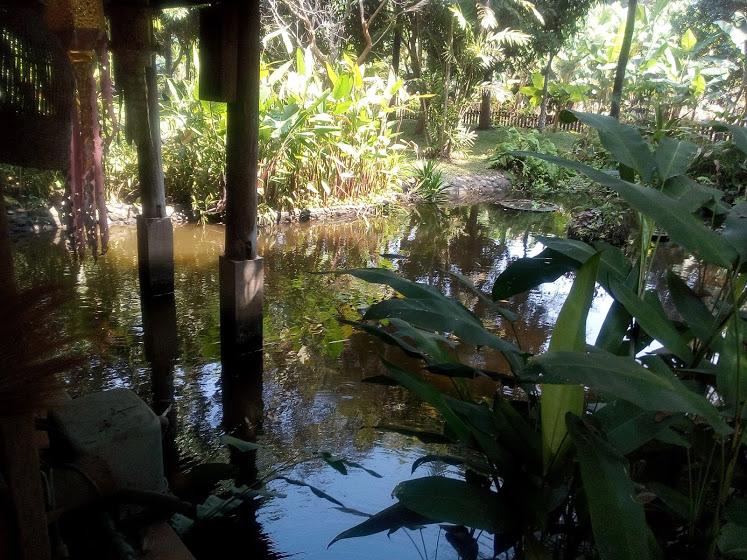 ダイニングルーム横の池2