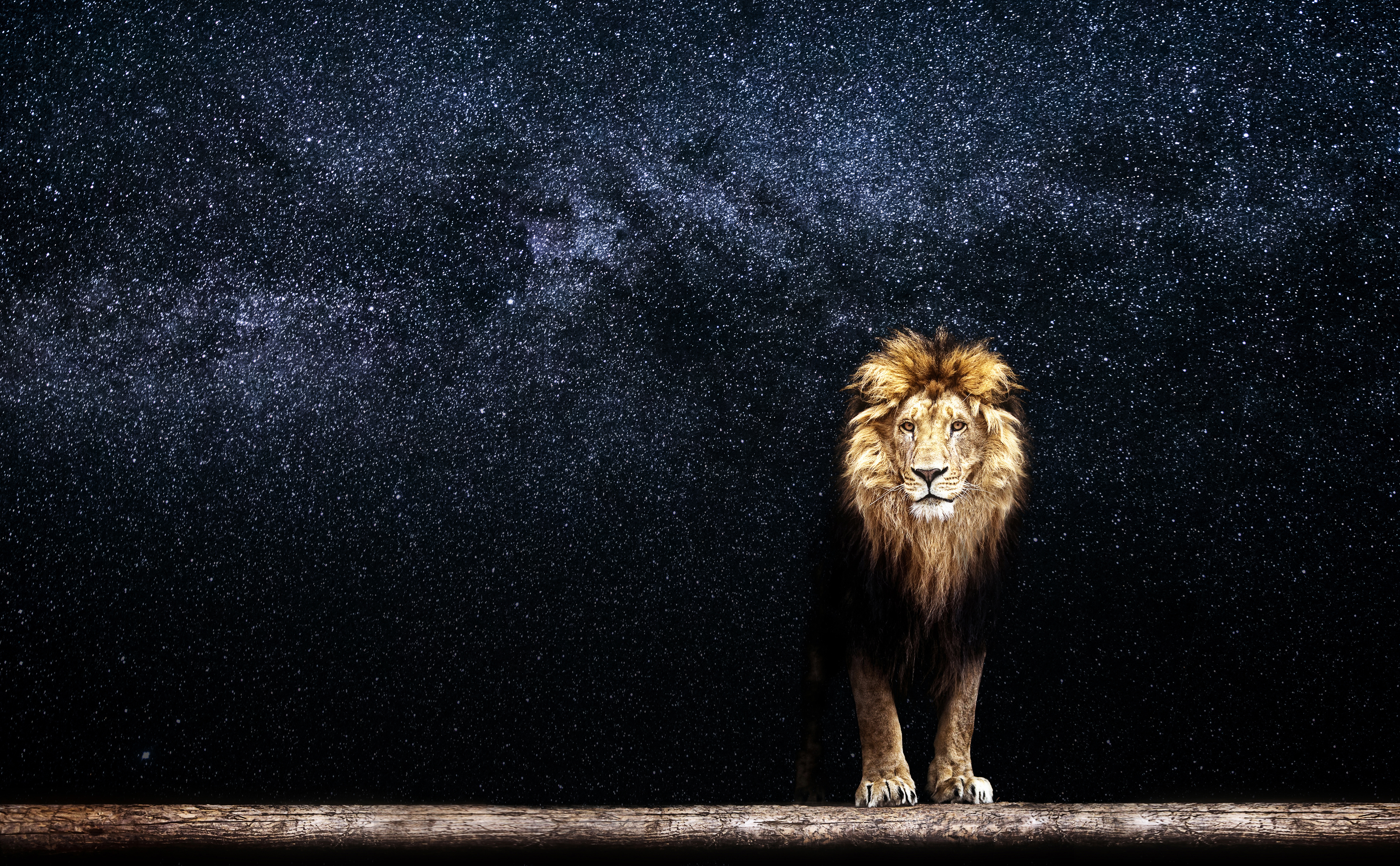 Lion Standing in Galaxy picture  (1)