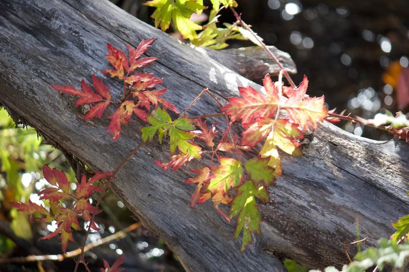Fall hike in Bend