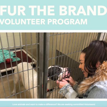 Fur The Brand's Volunteer Program