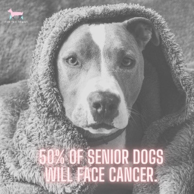Why is Canine Cancer on the Rise?