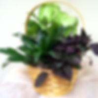 Small Dish Garden 1.jpg