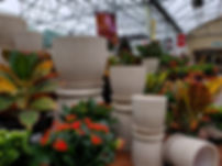 Pottery with House Plants.jpg