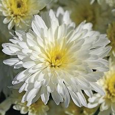 bertha white.jpg