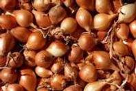 onion set.jpg