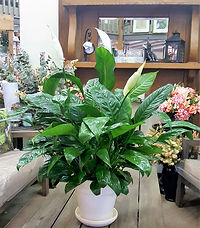 peace lily mantle.jpg