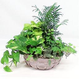 Dish Garden Lg.jpg