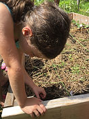 Planting seed in raised garden bed