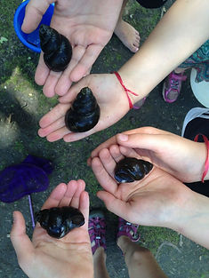 five hands holding freshwater snail shells