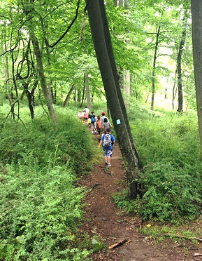 kids hike single file in old growth forest