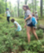 kids foraging for wild blueberries