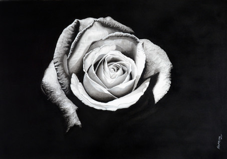 Virgin Rose