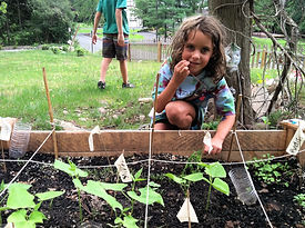 girl picking snacking on garden greens in front of raised vegetable bed
